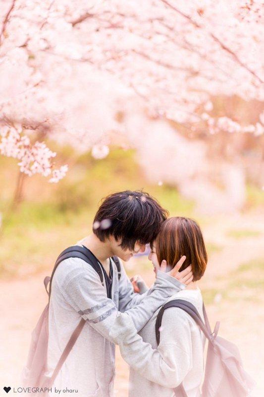 sakura_jp15